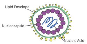 virus diagram